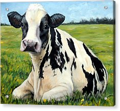 Holstein Cow Relaxing In Field Acrylic Print
