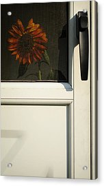 Home Is Where The Sun Is Acrylic Print by Luke Moore
