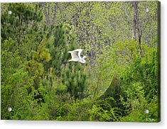 Home Of The Free Acrylic Print by Maria Urso