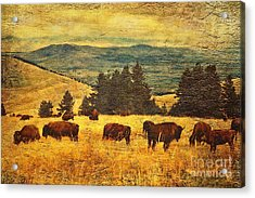 Home On The Range Acrylic Print by Lianne Schneider