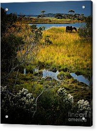 Home On The Range Acrylic Print
