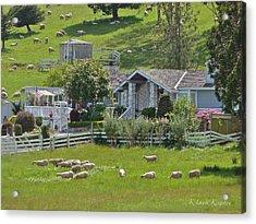 Home Sheep Home Acrylic Print