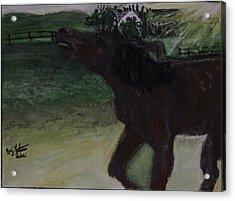 Home Sweet Horse Acrylic Print by Katrina Ricci