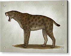 Homotherium Latidens, A Big Sabertooth Acrylic Print by Heraldo Mussolini
