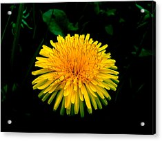 Honesty Acrylic Print by Lucy D