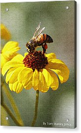 Honey Bee And Brittle Bush Flower Acrylic Print