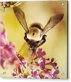 Acrylic Print featuring the photograph Honey Bee by Kim Fearheiley