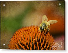 Honey Bee On Flower Acrylic Print by Dan Friend