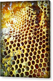 Acrylic Print featuring the photograph Honey Honey by Kristine Nora