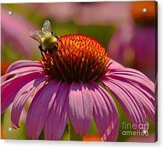 Honey Acrylic Print by Timothy J Berndt
