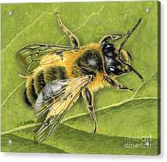 Honeybee On Leaf Acrylic Print by Sarah Batalka