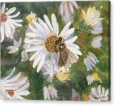 Honeybee On White Aster Acrylic Print by Lucinda V VanVleck