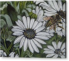 Honeybee Taking The Time To Stop And Enjoy The Daisies Acrylic Print by Kimberlee Baxter