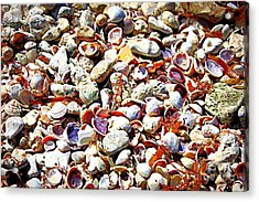 Honeymoon Island Shells - Digital Art Acrylic Print