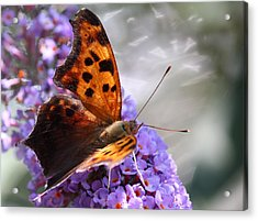 Honey's Courage Acrylic Print by The Art Of Marilyn Ridoutt-Greene