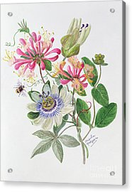 Honeysuckle And Passion Flower  Acrylic Print