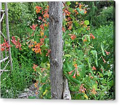 Honeysuckle's Friend Acrylic Print