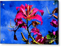 Hong Kong Orchids Acrylic Print by Elaine Manley