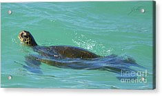 Acrylic Print featuring the photograph Honu II by Suzette Kallen
