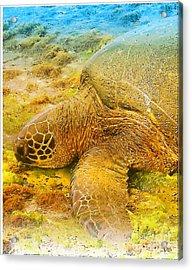 Honu  Sea Turtle Acrylic Print