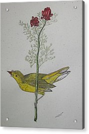 Hooded Warbler Acrylic Print by Kathy Marrs Chandler
