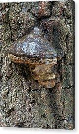 Hoof Or Tinder Fungus Acrylic Print by Nigel Downer