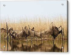 Hoop Nets Drying In The Sun Acrylic Print by Odd Jeppesen