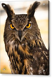 Hoot Acrylic Print by Annette Hugen