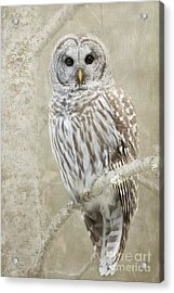Hoot Hoot Hoot  Acrylic Print by Beve Brown-Clark Photography