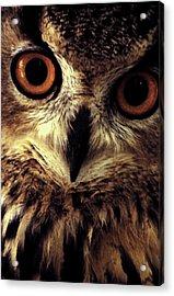 Hoot Owl Acrylic Print by Alfredo Martinez