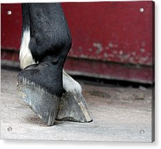 Hooves Acrylic Print by Lisa Phillips