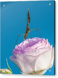 Hope And A Prayer Acrylic Print by Terry Cosgrave