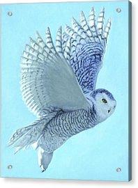 Hope Has Wings Acrylic Print