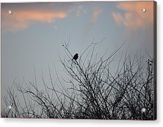 Hope Perched  Atop Acrylic Print