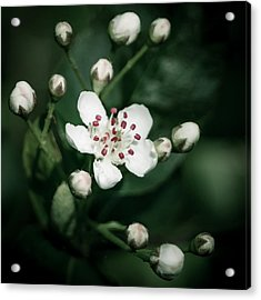 Hope Springs Eternal Acrylic Print