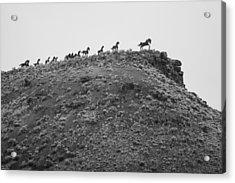 Horizon Horse Acrylic Print by Paul Bartoszek
