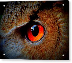 Acrylic Print featuring the painting Horned Owl Eye by David Mckinney