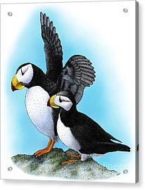Horned Puffins Acrylic Print by Roger Hall