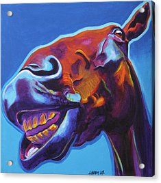 Horse - Finn Acrylic Print by Alicia VanNoy Call