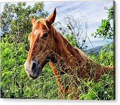 Acrylic Print featuring the photograph Horse 1 by Dawn Eshelman
