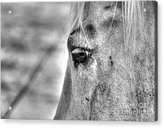 Horse 1 Acrylic Print by Jimmy Ostgard