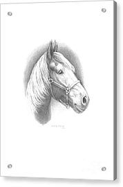 Horse-1 Acrylic Print by Lee Updike