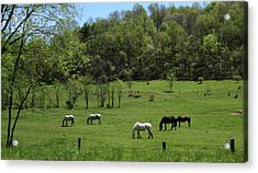 Horse 27 Acrylic Print