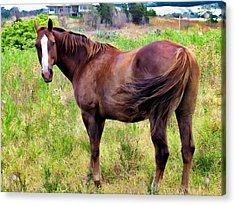 Acrylic Print featuring the photograph Horse 5 by Dawn Eshelman