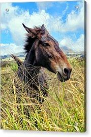 Acrylic Print featuring the photograph Horse 6 by Dawn Eshelman