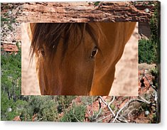 Horse And Canyon Acrylic Print