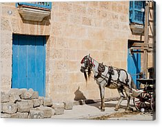 Horse And Carriage - Time Out. Acrylic Print