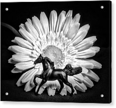 Horse And Daisy Acrylic Print