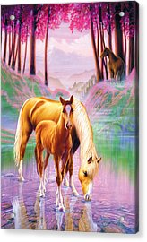 Horse And Foal Acrylic Print by Andrew Farley