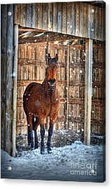 Acrylic Print featuring the photograph Horse And Snow Storm by Dan Friend